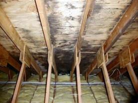 Check attic for moisture