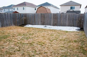 79 Allworth Cres., Bowmanville - Back Yard