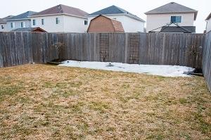 79 Allworth Cres., Bowmanville - Back Yard